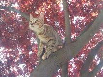 Gatito en árbol rojo Foto de archivo libre de regalías