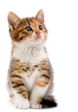 Gatito en blanco Imagen de archivo