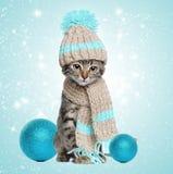 Gatito en bufanda y sombrero hechos punto con las decoraciones de la Navidad Foto de archivo