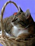Kitten In Basket Imagen de archivo libre de regalías