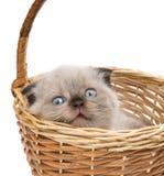Gatito en cesta Foto de archivo libre de regalías