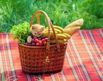 Gatito en cesta de la comida campestre Fotografía de archivo