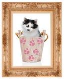 Gatito en cubo de madera en el marco clásico Fotos de archivo