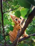Gatito en el árbol fotos de archivo