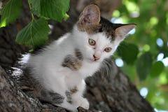 Gatito en el árbol Imágenes de archivo libres de regalías