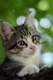 Gatito en el árbol Imagen de archivo libre de regalías