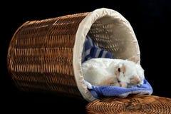 Gatito en el cesto Foto de archivo libre de regalías