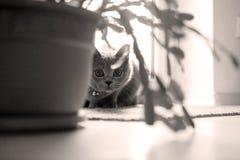 Gatito en el cuarto Foto de archivo