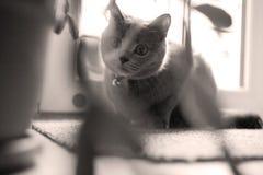 Gatito en el cuarto Foto de archivo libre de regalías