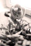 Gatito en el cuarto Fotografía de archivo
