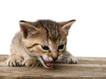 Gatito en el escritorio de madera Imagenes de archivo