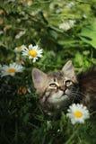 Gatito en el jardín imágenes de archivo libres de regalías