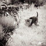 Gatito en el jardín Imagenes de archivo