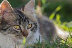 Gatito en el jardín Foto de archivo