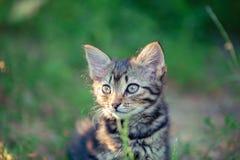 Gatito en el jardín fotografía de archivo libre de regalías