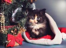 Gatito en el sombrero de santa y la composición del árbol de navidad Foto de archivo