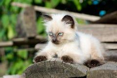 Gatito en el tablero Imagen de archivo