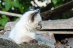 Gatito en el tablero Fotografía de archivo libre de regalías