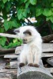 Gatito en el tablero Imagen de archivo libre de regalías