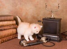 Gatito en el teléfono Imagen de archivo