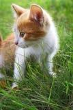 Gatito en hierba verde Foto de archivo