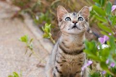 Gatito en jardín Foto de archivo libre de regalías