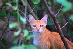 Gatito en jardín Fotos de archivo libres de regalías