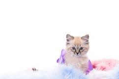 Gatito en la capa mullida azul del Año Nuevo Imagen de archivo