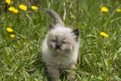 Gatito en la caza Imagen de archivo