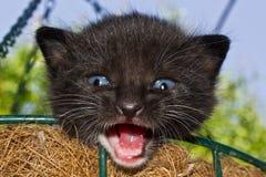 Gatito en la cesta Imagen de archivo libre de regalías