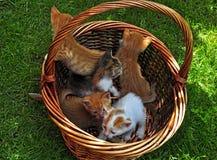gatito en la cesta Fotografía de archivo