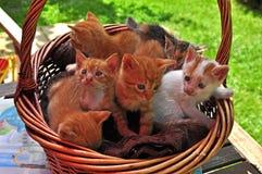 gatito en la cesta Fotos de archivo libres de regalías