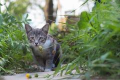 Gatito en la hierba en un día de verano Imágenes de archivo libres de regalías