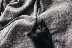 Gatito en la manta Imagen de archivo