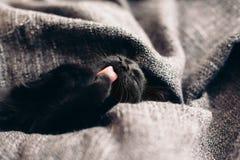 Gatito en la manta Imagen de archivo libre de regalías