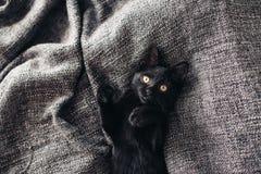 Gatito en la manta Fotografía de archivo libre de regalías