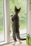 Gatito en la ventana Foto de archivo libre de regalías