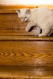 Gatito en las escaleras Imagen de archivo libre de regalías