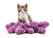Gatito en lila fotografía de archivo