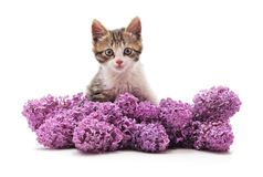 Gatito en lila imagen de archivo libre de regalías