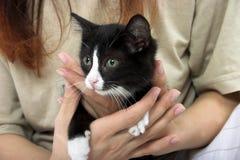 Gatito en manos Imagen de archivo