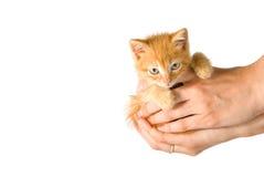 Gatito en manos Fotografía de archivo libre de regalías