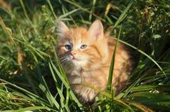 Gatito en naturaleza Foto de archivo