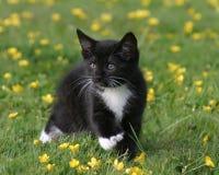 Gatito en ranúnculos imagen de archivo