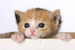 Gatito en rectángulo imagen de archivo libre de regalías