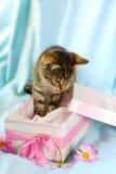 Gatito en rectángulo de regalo imagen de archivo