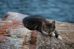 Gatito en roca por el mar Imágenes de archivo libres de regalías