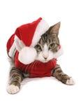 Gatito en traje de la alineada de lujo de la Navidad Fotos de archivo libres de regalías