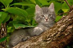 Gatito en un árbol Fotografía de archivo