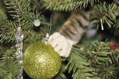 Gatito en un árbol de navidad Fotografía de archivo
